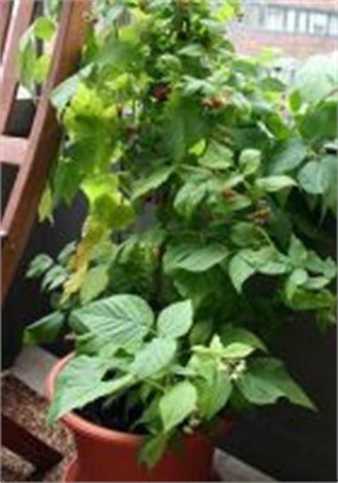 les fruitiers qui se plaisent en pot jardinage s