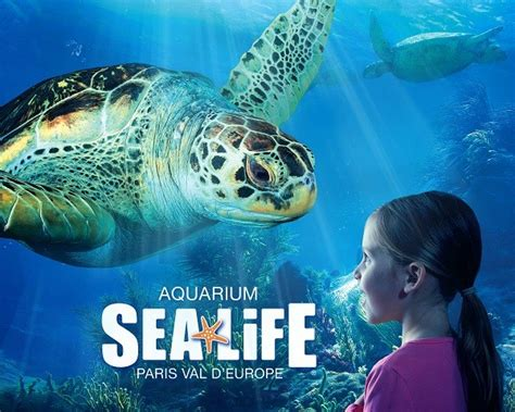 aquarium sea adulte et enfant marne la vall 233 e 77711 proxice