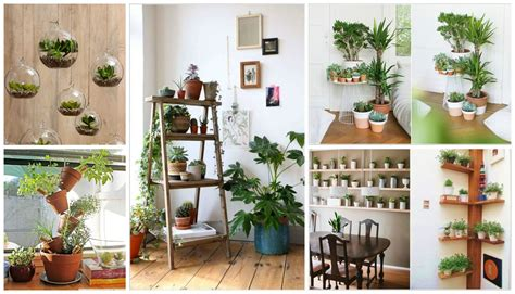 12 Creative Ideas How To Display Your Indoor Plants