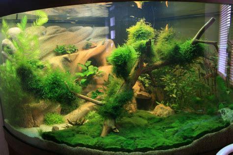 id 233 e d 233 co pour l aquarium