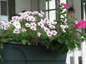 Die Schönsten Balkonpflanzen : pflegeleichte balkonpflanzen den balkon leicht und schnell versch nern ~ Markanthonyermac.com Haus und Dekorationen