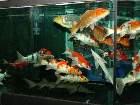 mon bassin de 10000 litres forum poissons