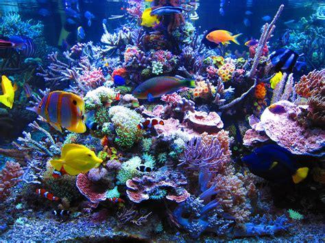 dormero hotel rotes ross reef aquarium reefland