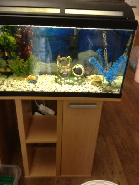 i tropical fish tank for sale smethwick west midlands pets4homes