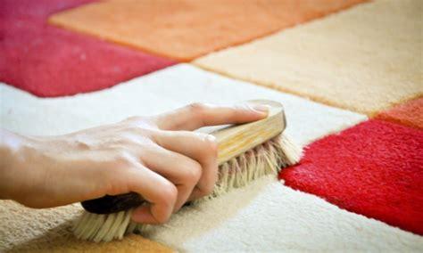 comment nettoyer l urine de chat sur votre tapis trucs pratiques