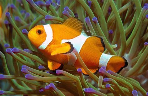 les poissons exotiques peuvent transmettre des maladies 224 l homme nuage ciel d azur