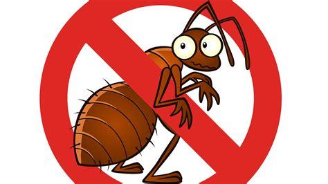Pestcontrol  Tampa Pest Control Services