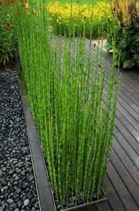 comment planter des bambous dans jardin archzine fr