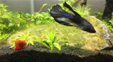 mon poisson passe d un bocal 224 un aquarium de 20l mais l eau redevient trouble