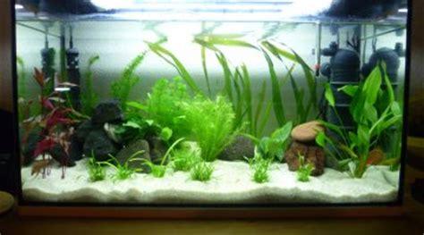faire un rideau de plante dans aquarium comment et quelle solution