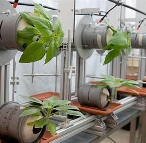 Pflanzen An Der Wand : biophysik forscher lassen pflanzen von der wand wachsen welt ~ Markanthonyermac.com Haus und Dekorationen