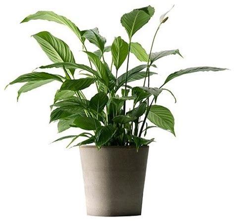 mandel plant pot 9 189 quot eclectic plants by ikea