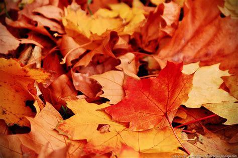 feuilles mortes en automne 1 photo paysage le