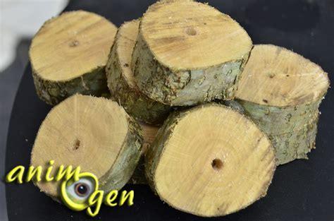 fabriquez un jouet pour perroquet avec des 231 ons de bois vert animogen