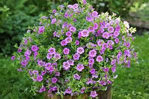Pflanzen Für Schatten. bodendecker f r schatten 10 pflanzen die ...
