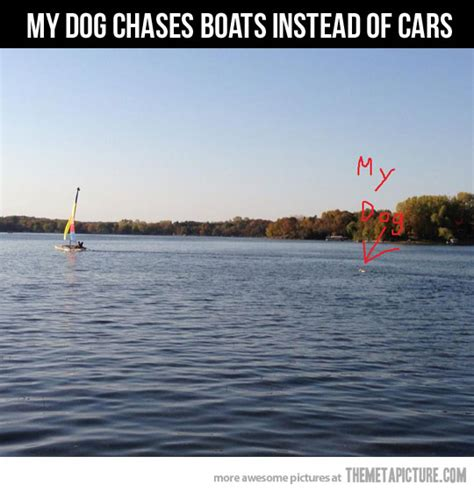 Boat Dog Quotes by Funny Boat Quotes Www Pixshark Images Galleries
