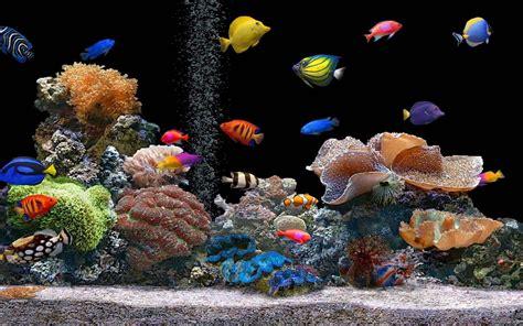 marine aquarium live wallpaper 1mobile