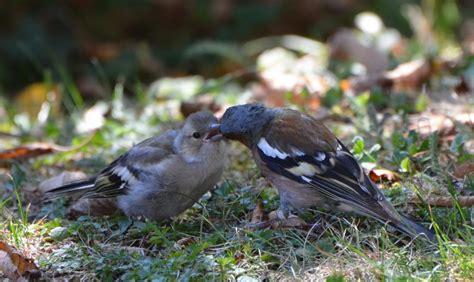 Tiere In Meinem Garten  Grillforum Und Bbq Www