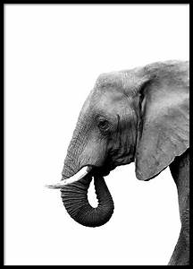 Tierbilder Schwarz Weiß : poster schwarz wei schwarz wei bilder online bestellen desenio ~ Markanthonyermac.com Haus und Dekorationen