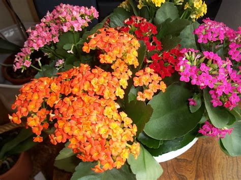 plantes grasses d int 233 rieur entretien photo de fleur une pensee fleuriste