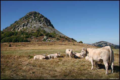 panoramio photo of le mont gerbier de jonc