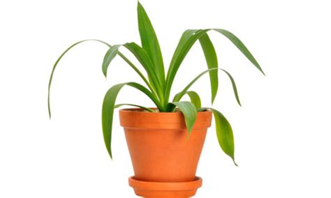 pot plants in the office or bad and style the guardian