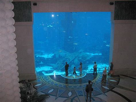 atlantis aquarium the palm
