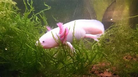 de beaux poissons foto di parc aquarium les naiades ottrott tripadvisor
