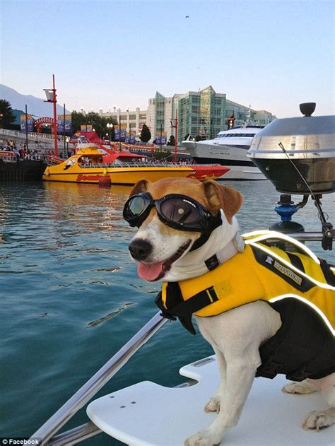 Dog Boat Captain by Meet Duma The Wakeboard Riding Speedboat Driving Jack