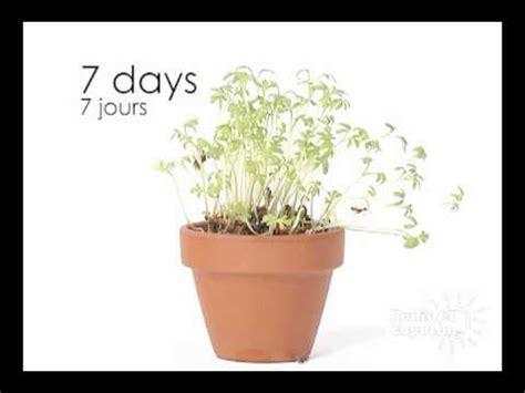 le cresson c est facile 224 faire pousser