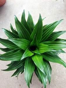 Große Zimmerpflanzen Pflegeleicht : feng shui pflanzen ber die schutz und komfortfunktion der zimmerpflanzen ~ Markanthonyermac.com Haus und Dekorationen