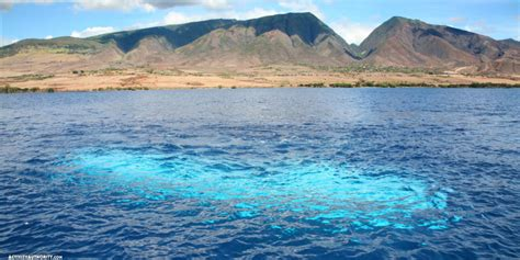 Maui Boat Tours by Maui Submarine Tours Submarine Tour Tickets In Hawaii