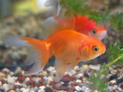 quel type de poisson forum poisson