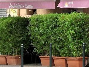Gräser Kübel Terrasse : die besten 17 ideen zu bambus sichtschutz auf pinterest bambus als sichtschutz bambus ~ Markanthonyermac.com Haus und Dekorationen