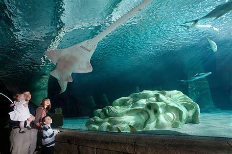 sea minnesota aquarium explore the aquarium