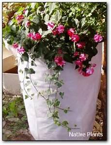Immergrüne Winterharte Kübelpflanzen : k belpflanze native plants gartenblog ~ Markanthonyermac.com Haus und Dekorationen