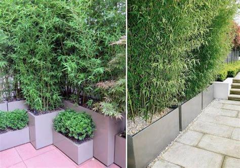 bambou en pot brise vue naturel et d 233 co sur la terrasse pots