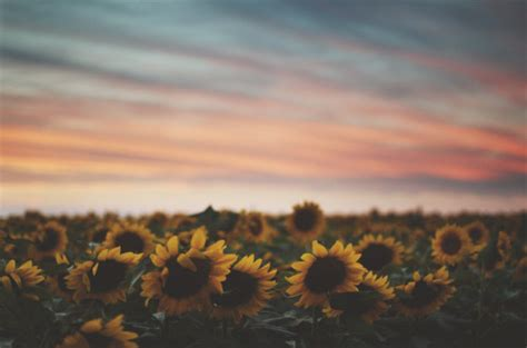 Pretty Landscape Sunset Hawaii Oahu Artists On Tumblr Sunflowers Teapalm •