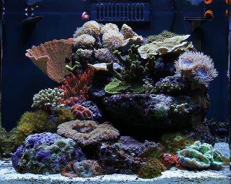 urbaneks 2010 featured nano reefs featured aquariums monthly featured nano reef aquarium