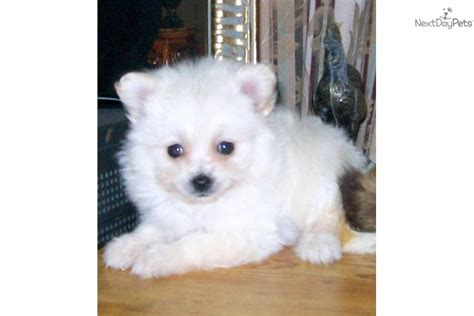 low shedding dogs uk non shedding non barking dogs breeds picture