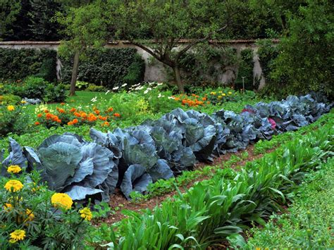 Garden Types : Vegetable Garden Design Ideas
