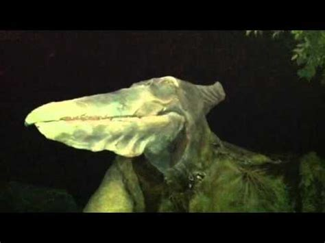 Boat Ride Comedy Youtube by Jurassic Jungle Boat Ride Youtube