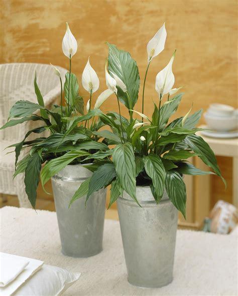 10 plantes d int 233 rieur d 233 polluantes femmes d aujourd hui