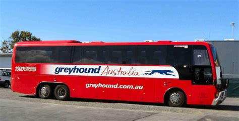 11 australia zoo to fraser island crikey thels travel tattle
