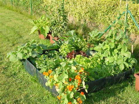 que planter et semer dans un potager en lasagne le jardin d une gourmande paresseuse