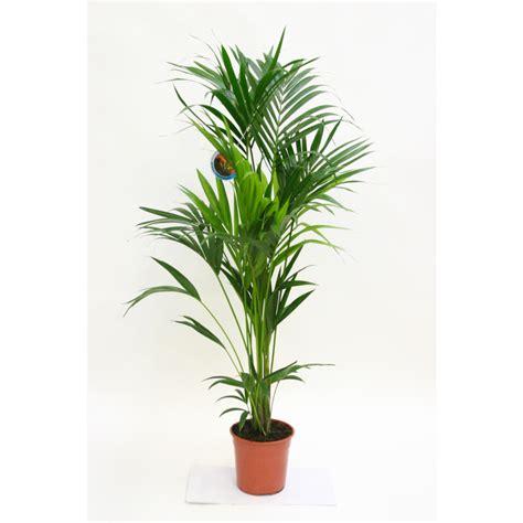 plantes vertes interieur design de maison