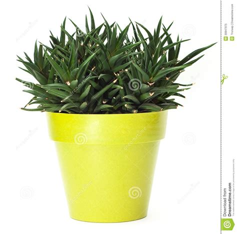 green plant in pot royalty free stock photo image 30847975