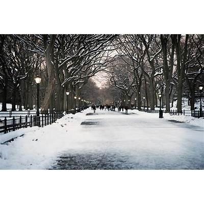 Winter in Central Park.Scenic WorldPinterest