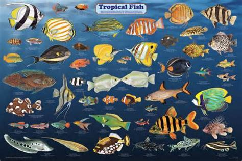types de poissons d aquarium questions et r 233 ponses