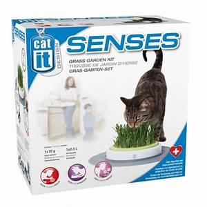 Alternative Zu Gras Garten : wissenswertes zu katzengras co zooroyal magazin ~ Markanthonyermac.com Haus und Dekorationen